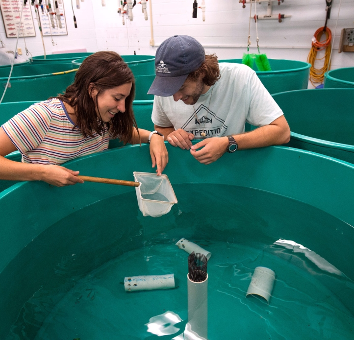Students studying water tub containing specimens